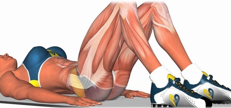 Ćwiczenia na uda - anatomia